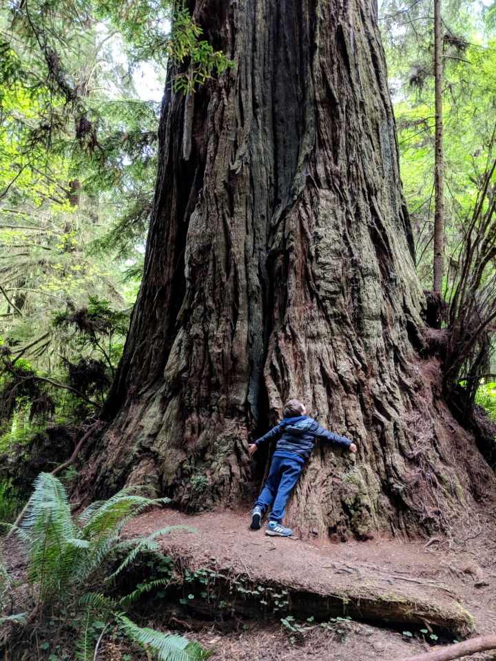 A spasso tra i giganti in California: Redwood National and StateParks