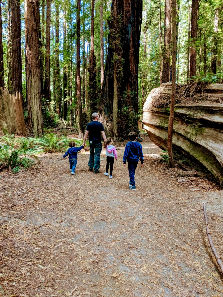 A spasso tra i giganti in California: Avenue of the Giants e Humboldt Redwoods StatePark